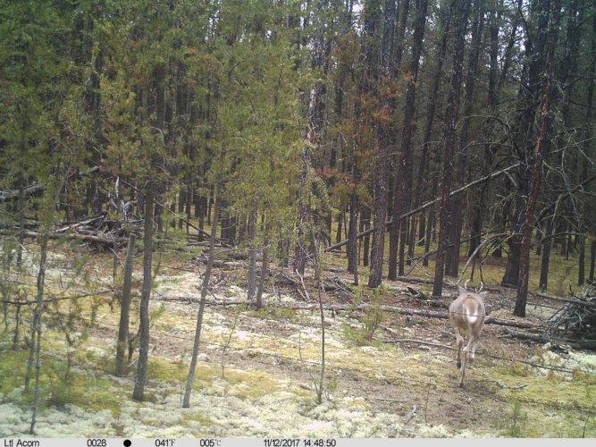 Ltl-acorn-trail-camera-taken-photo- (1)