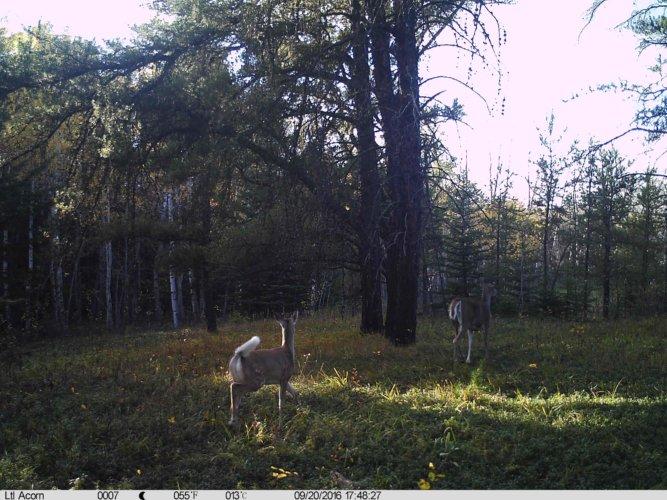 Ltl-acorn-trail-camera-taken-photo- (11)