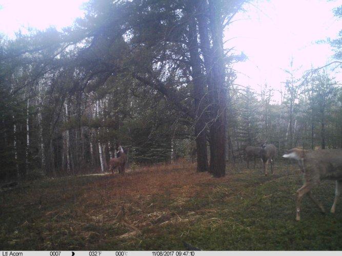 Ltl-acorn-trail-camera-taken-photo- (12)