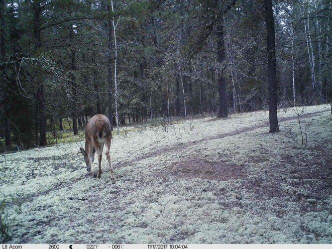 Ltl-acorn-trail-camera-taken-photo- (23)
