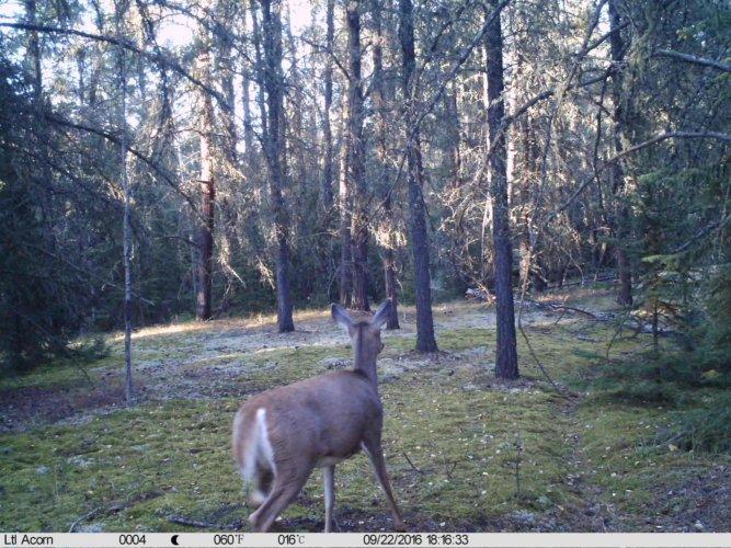 Ltl-acorn-trail-camera-taken-photo- (26)