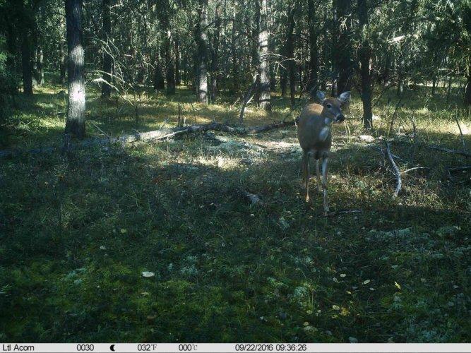 Ltl-acorn-trail-camera-taken-photo- (27)