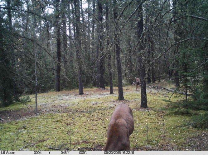 Ltl-acorn-trail-camera-taken-photo- (35)