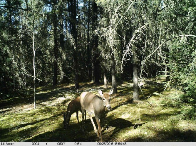 Ltl-acorn-trail-camera-taken-photo- (46)