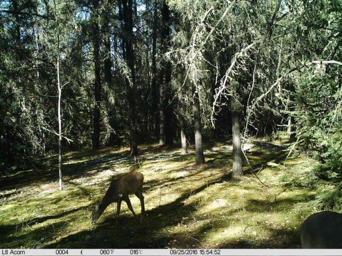 Ltl-acorn-trail-camera-taken-photo- (48)