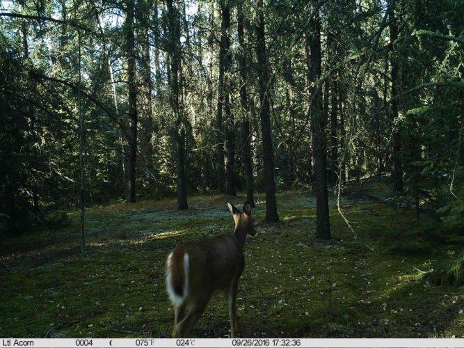 Ltl-acorn-trail-camera-taken-photo- (55)