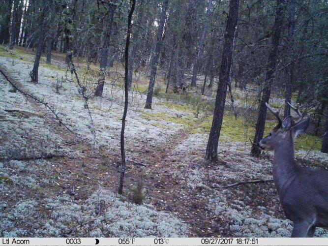 Ltl-acorn-trail-camera-taken-photo- (68)
